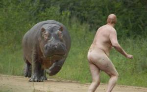 Skinny dipping during Hippo mating season: Not a good idea!