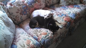 Suzy and Taco