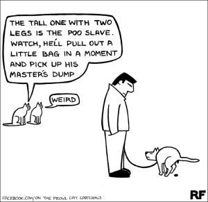 funny-cats1